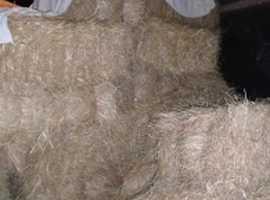 Good sized small bales of 2019 Organic Meadow Hay, no ragwort or rain, barn stored.