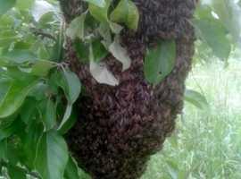 Faversham Beekeeper