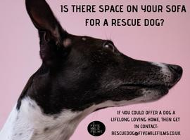 Is there space on your sofa for a rescue dog? A new primetime TV series wants to hear from you!