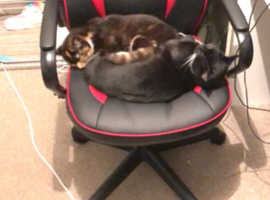 2 lovely cats for freehome(one black and is missing an eye no health issues) and lovely multi coloured girl both brother and sister roughly 1 year 2 m