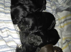5 Lovely Puppies