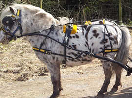 Top Marks shetland/pony synthetic harness