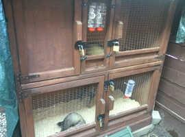 Ferrets, hutch, nets and equipment