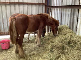 Very sweet kids pony in the making