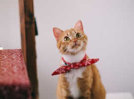 Experienced Greenwich Based Cat Sitter