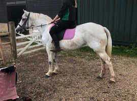 Very attractive 14.2hh grey mare 14yrs
