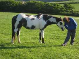 Reiki Healing for Horses