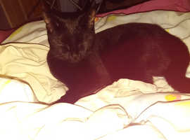 Black female cat looking for a new home