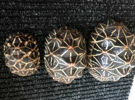 Adult stars Tortoises female