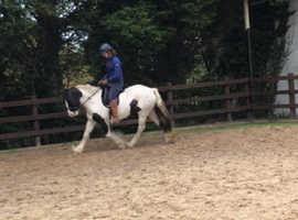 Stunning cob mare