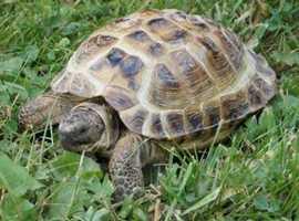Any tortoises?? I will rehome