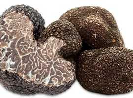 Truffle mushrooms
