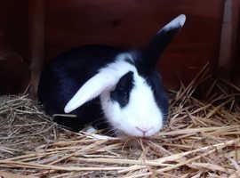 *** Rabbit and hutch ***