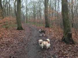Dog Walking, Cat Sitting & Pet Services