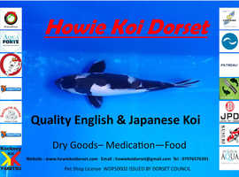 Howie Koi Dorset - Pond Cleaning and Maintenance, Quality Koi, Pond Equipment - Can travel to Dorset, Hampshire and Somerset - Distribute UK wide