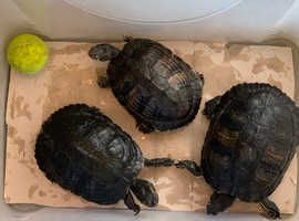 Terrapins for sale!!
