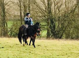 Sweet 15.2/15.3hh 16y TB mare