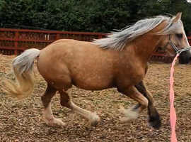 I am looking for sharers for my horses