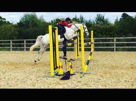 jc pony for sale or loan