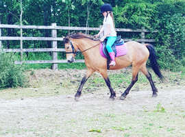 Top child/teens pony for part loan