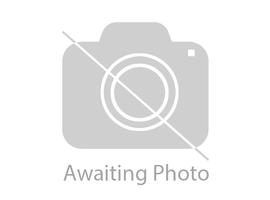 Pair of white / gold pottery dogs