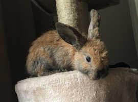 2 beautiful and cute baby bunnies