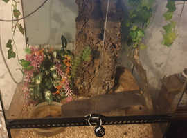 3 green tree frogs with tank