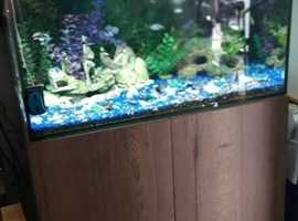 Fishtank and cabinet hydro filter with fish