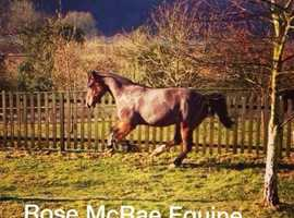 Horse Finding Service at Rose McRae Equine