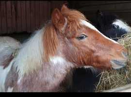 Beautiful colt foal