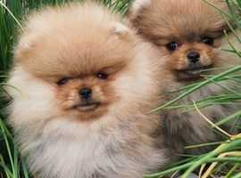 Microchipping puppies and kittens £10