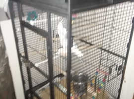 Cockatiel and large cage