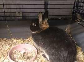 rabbits x2