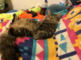 Lost cat chard somerset