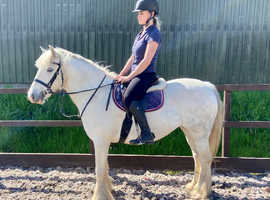 13.2hh 6 year old mare