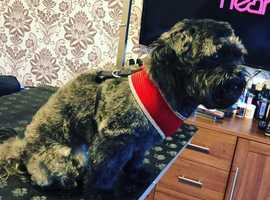 SIMPLY DOG GROOMING WESTHOUGHTON
