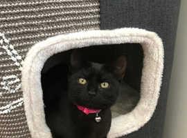 missing Willow small black kitten Tattenhoe,Milton Keynes
