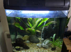 REHOME UNWANTED FISH !!!