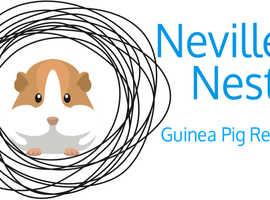 Nevilles Nest Guinea Pig Rescue