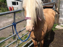 Super ride and drive pally pony