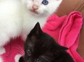 4 kittens left for sale