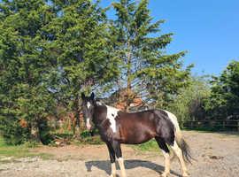 Stunning sports horse!
