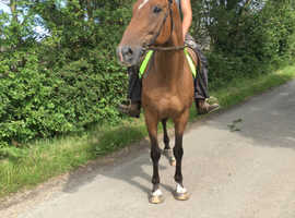 Fun, forward gelding in search for a new best friend!
