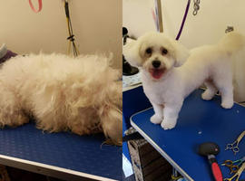 24hr grooming specialist and pet care products