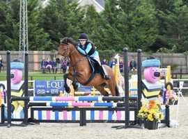 Dream all-rounder pony