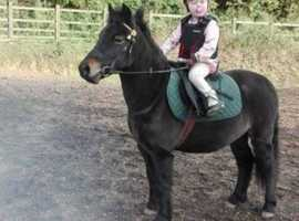 Pony for Full Loan to stay at current yard