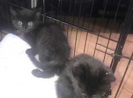 Beautiful super friendly kittens