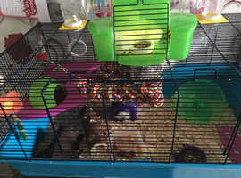 A very large hamster cage with all accessories included + food, sawdust, bedding