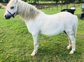 Welsh a offers to good home