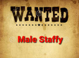 *wanted* male staff / SBT